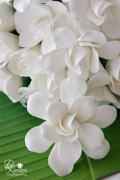 Gardenia Bouquet for a Bridal Photoshoot Gardenia Wedding Bouquets, Gardenia Bouquet, Fondant Flowers, Clay Flowers, Flower Petals, My Flower, White Flowers, Beautiful Flowers, White Gardenia