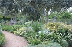 Lambley nursery, olive trees