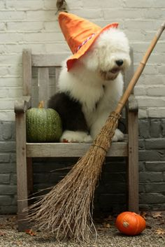 Happy halloween from Maestro Big Dogs, Cute Dogs, Dogs And Puppies, Doggies, English Sheepdog Puppy, Animal Pictures, Cute Pictures, Animals And Pets, Cute Animals