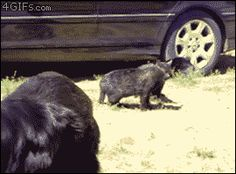 You wanna see a cat fight?