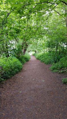 A pretty tunnel of greenery.
