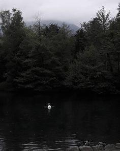 """09/06""""Personne ne prendrait la peine d'aller accrocher dans le vrai ciel une contrefaçon de lune.""""• Haruki Murakami, 1Q84.▪ ▪ ▪ ▪{#nature #fairy #inspiration #dark #darkphotography #moody #witch #swan #Murakami #ipreview }"""