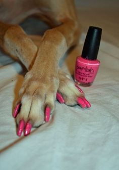 Get your pooch pampered at Woof Gang Bakery #Raleigh