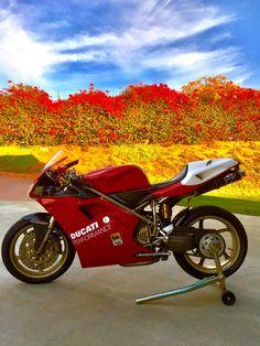 Ducati 998, Ducati Superbike, Ducati Motorcycles, Cars And Motorcycles, Boy Toys, Toys For Boys, Ducati Performance, Vr46, Motorcycle Engine