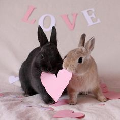 Somebunny loves you. Cute Baby Bunnies, Funny Bunnies, Cute Babies, Fluffy Bunny, Animals And Pets, Funny Animals, Kawaii Bunny, Honey Bunny, Tier Fotos