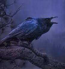 Bildergebnis für screaming crow