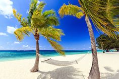 7 Mile Beach in the Grand Cayman. See what other beaches made our list of the best Beaches in the World. Hammock Beach, Hammocks, Romantic Beach Photos, Beach Images, Beach Pictures, Grand Cayman, Tropical Beach Resorts, Tropical Beach Houses, Tropical Homes