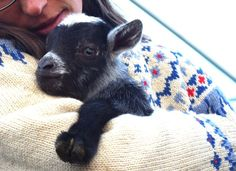 Baby goats are the cutest. Maybe only tied with lambs for cutest farm baby.