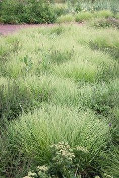 Image result for sweetgrass landscaping fields