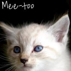 Me-too is an adoptable Ragdoll Cat in Clermont, FL. You can visit this Adorable Adoptable at our no-kill Adoption Center, located at 4648 Baptist Island Road, Groveland, FL. 34736. Visiting hours are ...