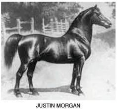 Justin Morgan - the foundation of the Morgan breed.