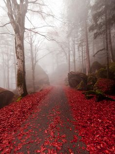 Autumn path, Lombardy, Italy