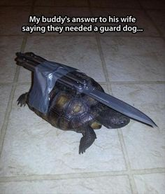 And that folks is why turtles are scary!