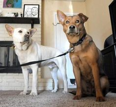 Adopted dog treks 10 miles in freezing cold back to shelter to be with his beloved mate