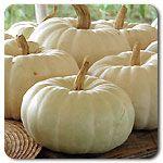 Organic Valenciano Pumpkin.