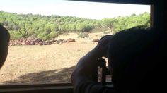 Vive la fotografía de la aves emblemáticas de Sierra Morena desde nuestros hides.