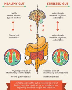 The gut brain connection. What do you think? Visit goprobioticbenefits.com #probiotics #probioticskincare #probioticsupport #probioticsforlife #probioticsupplement #probioticsforthewin #probioticsoda #guthelath #probiotics101 #guthealthmatters #guthealthy #guthealthiskey #guthealthiseverything