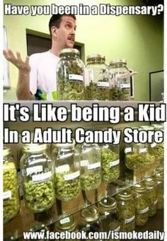 3f6e921906a1ef30769b5076e7f556f4 marijuana facts medical marijuana pretty much a gratuitous leaves shot check out stoney sundays,Kid In A Candy Store Meme