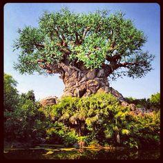 Disney's Animal Kingdom in Lake Buena Vista, FL