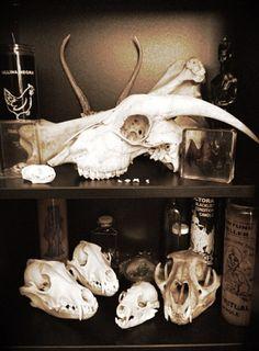 Oddities | cabinet of curiosity