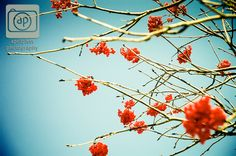 #berries #blue #red #spring #winnipeg #photography Spring in Winnipeg.
