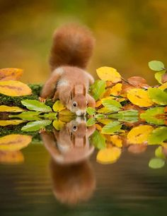 cute-squirrel-photography-151__700