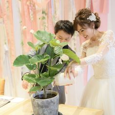 木に水をあげる「水合わせの儀」のやり方と結婚式演出まとめ | marry[マリー]