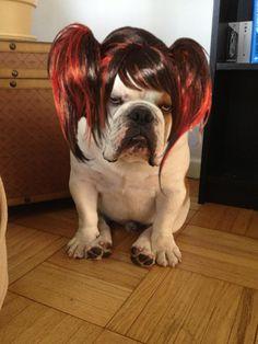 Funny #Bulldog