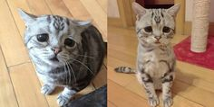 Luhu the tabby cat has a face that looks sad all the time