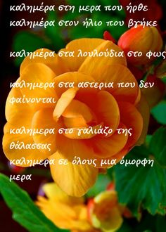 Container Flowers, Good Morning, Stuffed Peppers, Greek, Buen Dia, Bonjour, Stuffed Pepper, Good Morning Wishes, Greece