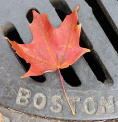 Day 208--Fall in Boston