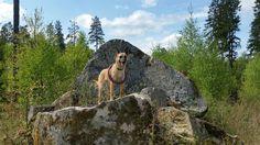Schweden ist auch für den Hund ein Erlebnis….
