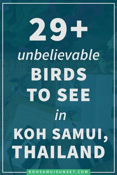 Birds and Bird-watching on Koh Samui, Thailand: The 29+ birds we've seen so far + your top FAQs, the best Thailand birding books and Thailand bird-watching tips!!