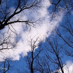 【rachel_covowz】さんのInstagramをピンしています。 《『birds ensemble』 耳を澄ませば👂 #photography #fujifilm #fujifilmxm1 #sky #forest #trees #空 #森 #木々 #intheforest #inthepark #birdsong #ensemble #tokyocameraclub #東京カメラ部 #写真好きな人と繋がりたい #写真撮ってる人と繋がりたい》