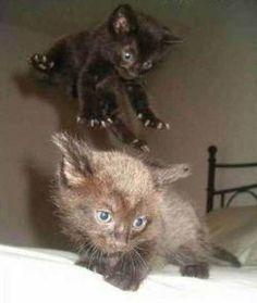 Kitten attack!!!