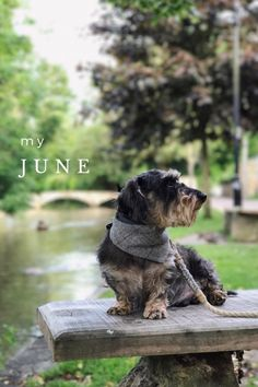 'My June' (quite late but better late than never!) on @stellerstories.