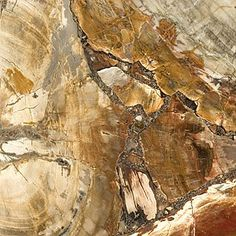 Petrified Wood™