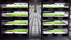 WOW. This robot-run indoor farm can grow 10 million heads of lettuce yearly: http://bit.ly/1Oj0Oth @adele_peters