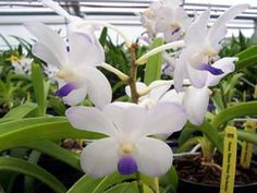 Orchid gardening what you need to know orchid orchids garden and orchid care kent kobayashi workwithnaturefo