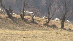 Bucovina I Love You, My Love, Romania, Horses, Animals, Te Amo, Animales, Je T'aime, Animaux