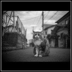 cat  ご近所さん