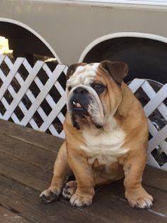 The Bulldog Brigade: Summer Recap