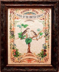 Nests and Eggs of Birds of the United States Cover Art from 1882