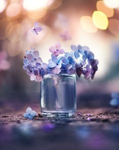 36 Trendy Ideas For Flowers Photography Wallpaper Nature Wallpapers Flower Vases, Flower Art, Flower Arrangements, Flower Wallpaper, Nature Wallpaper, Hydrangea Wallpaper, Beautiful Wallpaper, Amazing Flowers, Beautiful Flowers