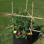 Easy Cage Container garden things connects Vegetable Garden Design, Garden Tools, Plant Supports, Container Gardening, Cage, Connection, Vegetables, Plants, Yard Tools
