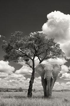 Elephant Under A Tree by Mario Moreno