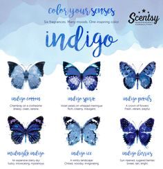 """Each Indigo set includes six Scentsy Bars in a stunning gift box with a scented """"Be Inspired"""" notecard to put on display for just $36 (CAD).https://reneeroy.scentsy.ca/Buy/Category/3376#exploreindigo #scentsy #fragrance"""