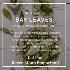 Bay leaves have roots in many types of ancient magick and rootwork. You can even use them as paper in your spells for an extra kick! Come get some of our organic super high quality Bay Leaves and add some power to your practice! Herbal Witch, Witch Herbs, Magic Herbs, Herbal Magic, Burning Bay Leaves, Potions Recipes, Spiritual Prayers, Kitchen Witchery, Money Spells