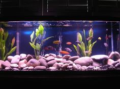 55 gallon two double whisper 60 gallon filters riverstones cichlid mix