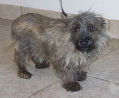 Col. Potter Cairn Rescue Network: LAVON finds freedom with CP! Can't wait to see this sweet girl after some loving and a good grooming.  LaVon is was named in honor of a volunteer's mother as part of our Name a Rescue Cairn program.
